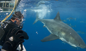 Shark Cage Diving Underwater Photography