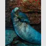 An Underwater Photographer's Guide To Shooting Monk Seals In Niihau, Hawaii