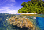 The Best Underwater Photography in the Indo Pacific: New Britain's Kimbe Bay