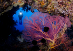 The Best Underwater Photography in the Indo Pacific: Outer Kimbe Bay and Father's Reef