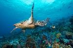The Good Life - Remote Underwater Photography in Luxury