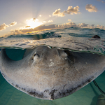 Iconic Dive Site: Stingray City
