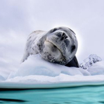 An Underwater Photographer's Guide To Antarctica