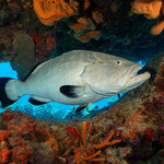 An Underwater Photographer's Guide to Cozumel