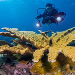 An Underwater Photographer's Guide to Puerto Rico