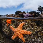 An Underwater Photographer's Guide to California
