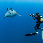 Portuguese Pelagics: Photographing the Sharks and Rays of the Azores
