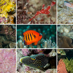 Bunaken National Marine Park: Ten to Treasure