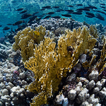 Underwater Seascapes of the Southern Red Sea